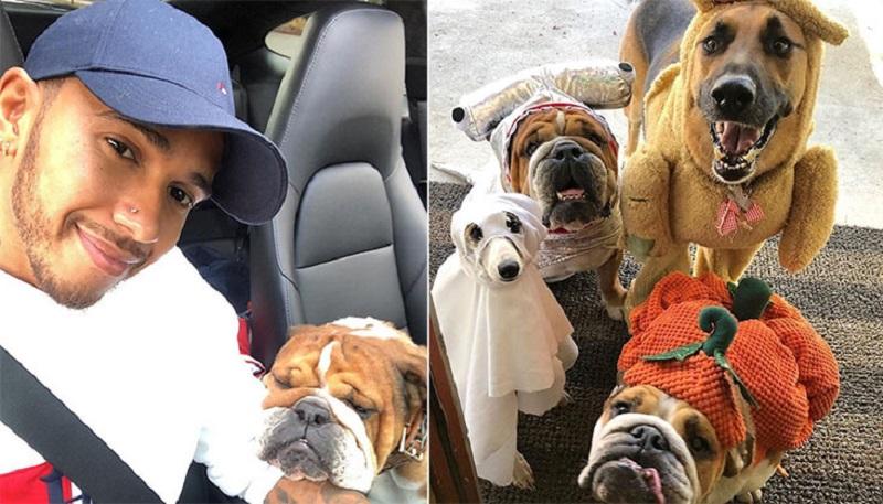 https: img-z.okeinfo.net content 2019 11 06 196 2126420 potret-gemas-juara-dunia-f1-2019-lewis-hamilton-dengan-anjing-peliharaan-6OMKWNkqBx.jpg