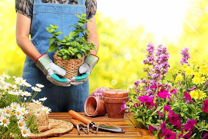 https: img-z.okeinfo.net content 2019 11 14 612 2130053 mnc-dukung-international-flower-competition-2020-e6SA3r6ZYF.jpg