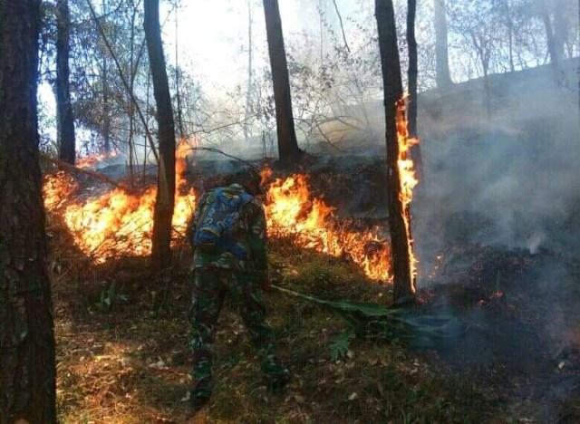 https: img-z.okeinfo.net content 2019 11 16 512 2130693 kebakaran-di-gunung-lawu-ribuan-orang-dilibatkan-untuk-padamkan-api-H83cNHxoyJ.jpg