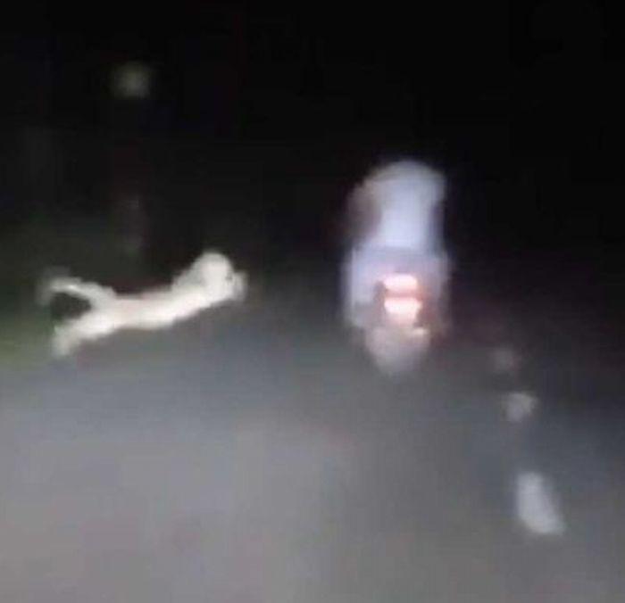 https: img-z.okeinfo.net content 2019 11 20 52 2132114 lolos-dari-maut-bikers-ini-nyaris-diterkam-macan-tutul-k2lh1l85JO.jpg