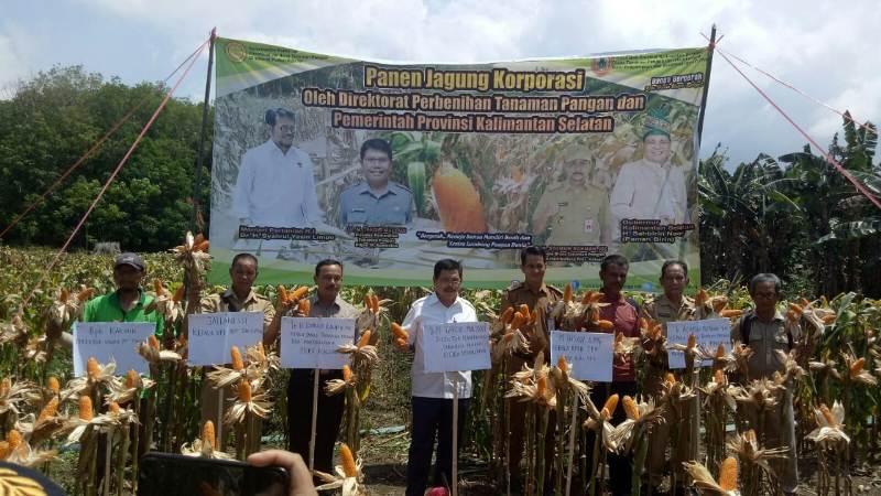 https: img-z.okeinfo.net content 2019 11 27 1 2135215 petani-kalsel-mulai-panen-jagung-hasil-program-korporasi-kementan-hH02TfkmUN.jpg