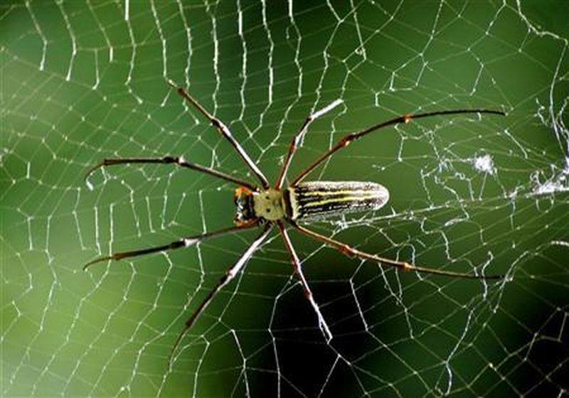 https: img-z.okeinfo.net content 2019 12 04 65 2138033 laba-laba-bisa-masuk-ke-mulut-manusia-saat-tidur-mitos-atau-fakta-LeldyMbeuO.jpg
