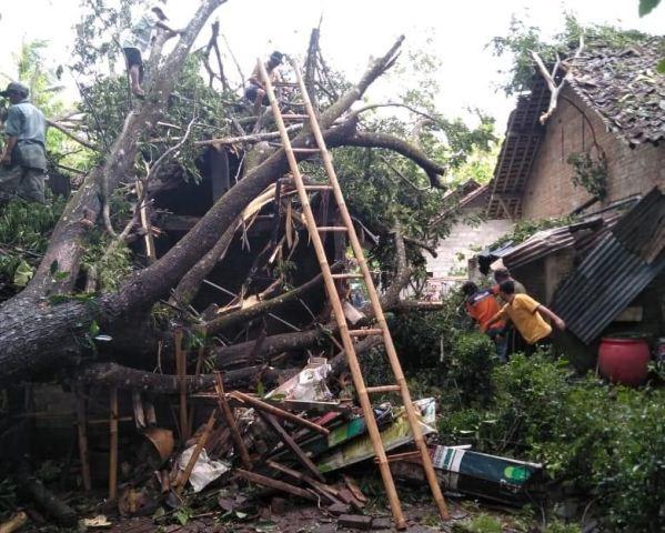 https: img-z.okeinfo.net content 2019 12 08 510 2139454 hujan-angin-di-yogyakarta-puluhan-rumah-rusak-dan-ratusan-pohon-tumbang-pO4wHm5AsW.jpg