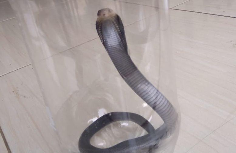 https: img-z.okeinfo.net content 2019 12 11 338 2140674 tips-warga-soal-teror-ular-kobra-di-perumahan-citayam-QLxMbYsIfw.jpg
