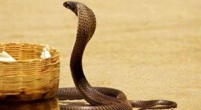 https: img-z.okeinfo.net content 2019 12 19 338 2143810 warga-digigit-ular-kobra-lpbhnu-desak-pemkot-depok-tanggung-jawab-3JxTBTsPMj.jpg