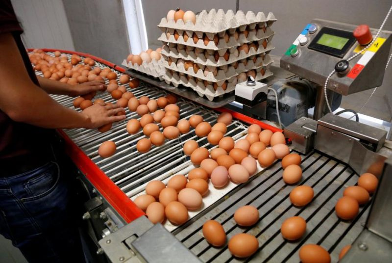 https: img-z.okeinfo.net content 2019 12 27 320 2146525 jelang-akhir-tahun-harga-ayam-hingga-daging-catatkan-kenaikan-lnQ7flaOGl.jpg