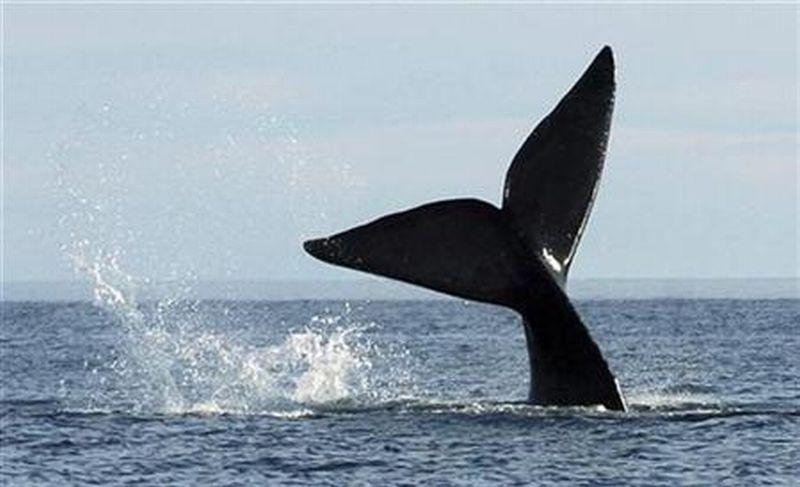 https: img-z.okeinfo.net content 2020 01 13 614 2152510 sains-dalam-alquran-ikan-paus-biru-yang-sanggup-jelajahi-lingkaran-dunia-mv130A1SI6.jpg