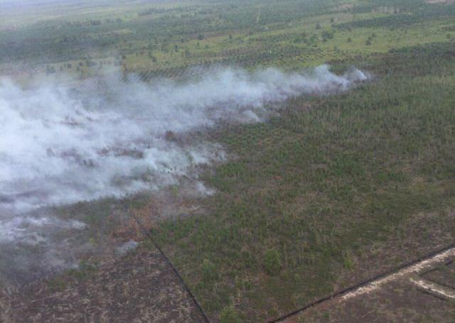 https: img-z.okeinfo.net content 2020 01 16 340 2153932 satgas-karhutla-berjibaku-padamkan-kebakaran-hutan-konservasi-di-riau-0vB9c5niXP.jpg