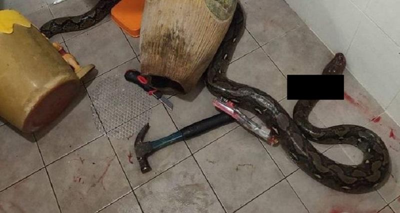 https: img-z.okeinfo.net content 2020 01 17 612 2154528 viral-perempuan-diserang-ular-piton-saat-buang-air-besar-bikin-ngeri-JZpyDKuw3g.jpg