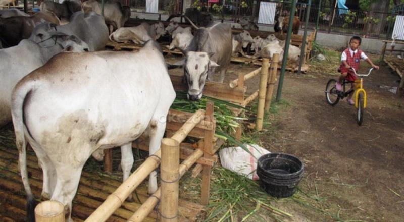 Sementara, dampak isu antraks mempengaruhi tingkat konsumsi daging di Pasar Argosari Wonosari.