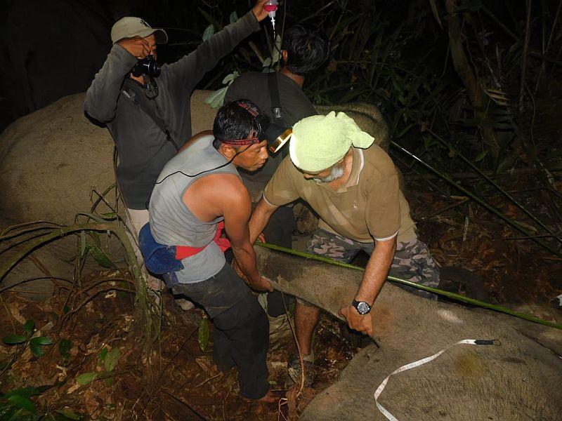https: img-z.okeinfo.net content 2020 01 28 340 2159330 lagi-gajah-sumatera-terkena-jerat-di-hutan-taman-industri-riau-NTlDUbTk7Z.jpg