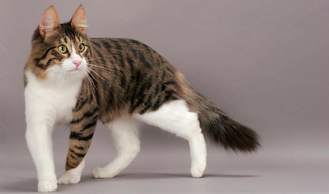 https: img-z.okeinfo.net content 2020 02 13 330 2167805 catat-ini-hukum-jual-beli-kucing-dalam-islam-2PbYfDvUxv.jpg
