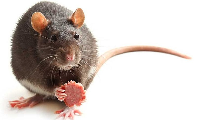 https: img-z.okeinfo.net content 2020 02 19 612 2171120 ketika-tikus-adu-jotos-di-stasiun-tertangkap-kamera-iDvrttDVTH.jpg