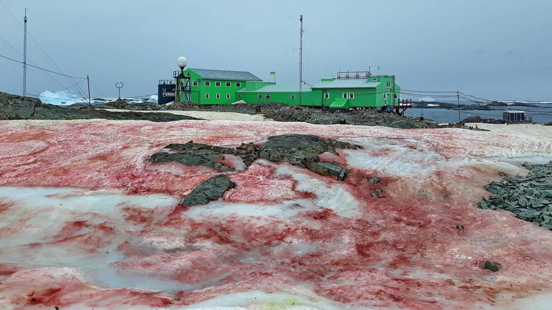 https: img-z.okeinfo.net content 2020 02 26 18 2174341 salju-merah-darah-selimuti-stasiun-kutub-ukraina-di-antartika-9iUbKquwrP.jpg