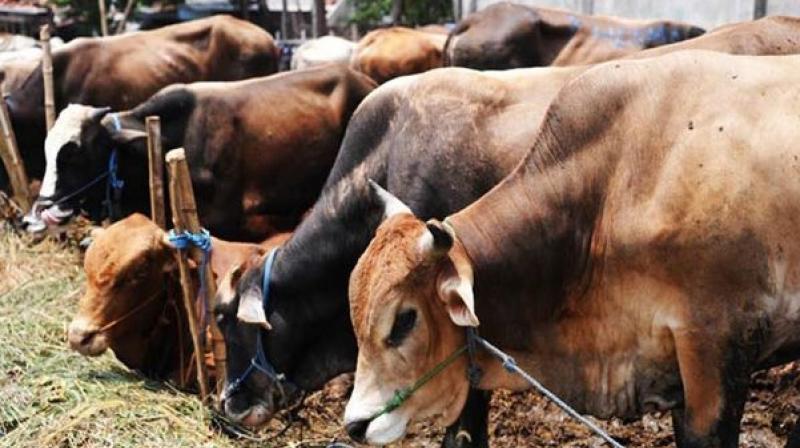 https: img-z.okeinfo.net content 2020 04 02 18 2193079 gara-gara-wabah-corona-beberapa-ternak-di-india-diberi-makan-stroberi-EI3FxK3ZBc.jpeg