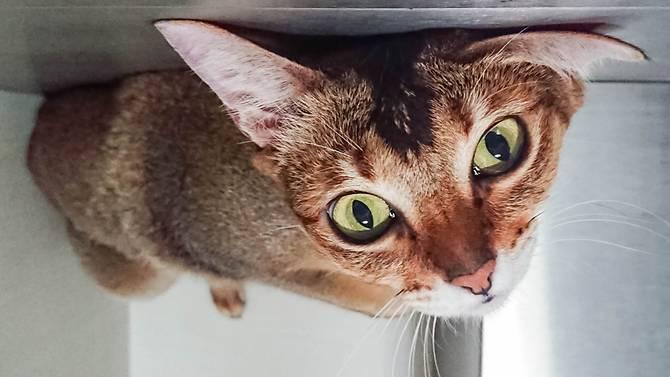 Kucing (Pet Photography)
