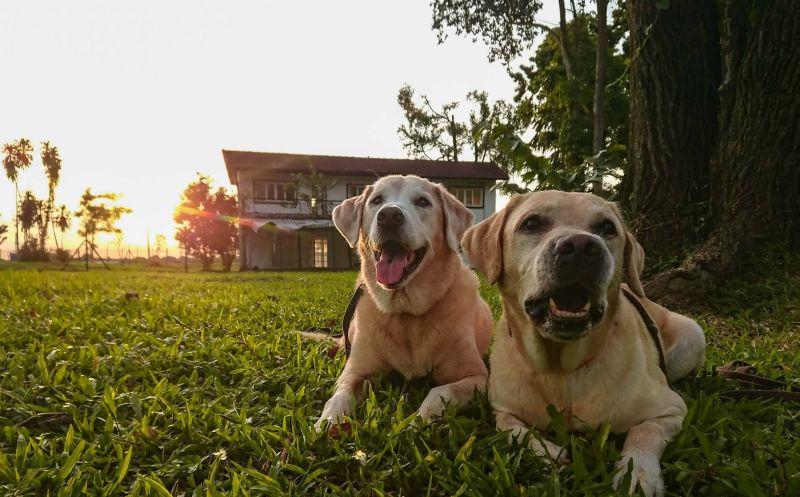 Anjing (Pet Photography)