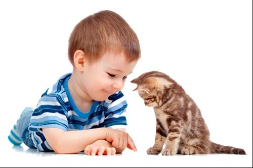 Kucing dan Anak
