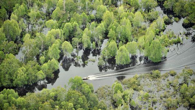 Danau Sentarum, Getty Images