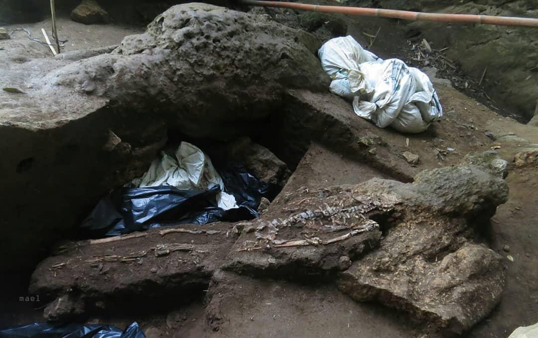 fosil 4.000 tahun babul (Instagram)