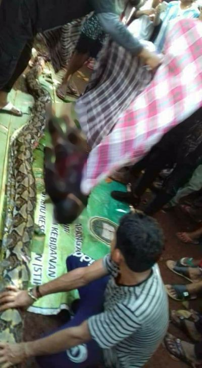 Wanita Paruh Baya Dalam Ular Sanca (foto: Chanry/Okezone)