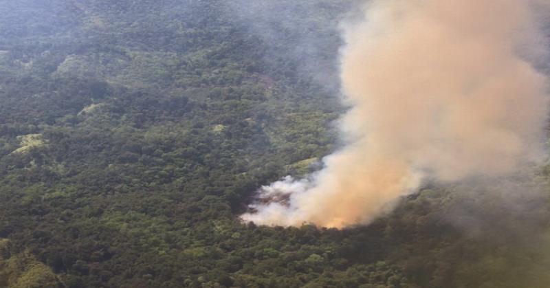 Kebakaran Hutan (Foto : Ist)