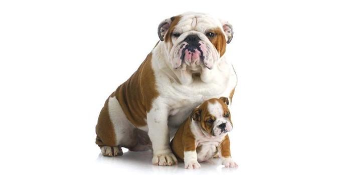 Jangan Salah Beli Ini 5 Jenis Anjing Yang Cocok Untuk Peliharaan Si Kecil Okezone Lifestyle