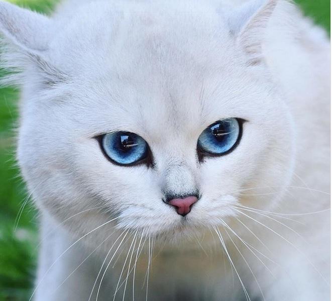 78 Foto Gambar Kucing Yang Tidak Berwarna Paling Keren