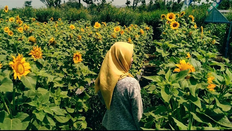 Cantiknya Spot Selfie Bunga Matahari Di Boyolali Okezone Lifestyle
