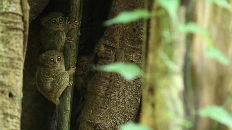 4500 Gambar Hewan Langkah Di Indonesia Terbaik