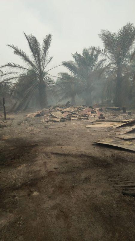 Kebakaran Hutan di Rohil, Riau (foto: Banda/Okezone)
