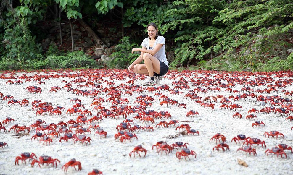 Migrasi Kepiting