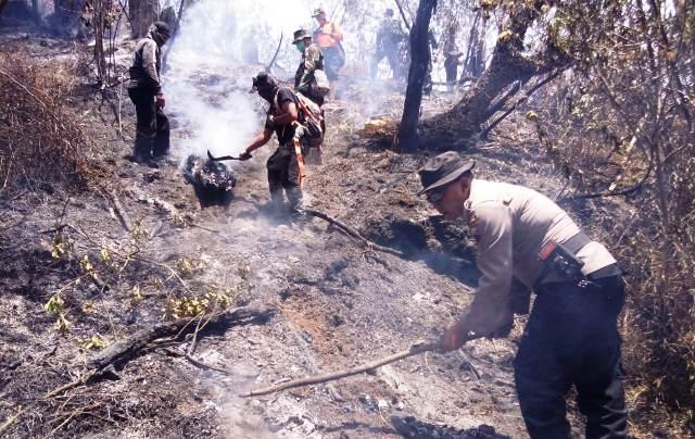 Kebakaran hutan Gunung Sindoro (Ist)