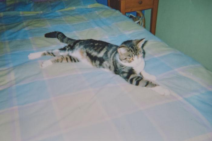 Kucing Hilang (Boredpanda)