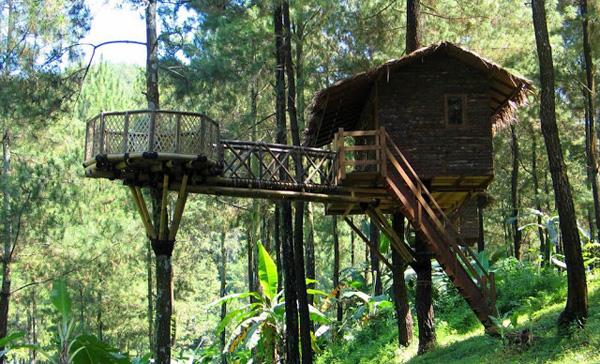 rumah pohon