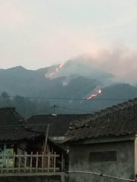 Kebakaran hutan Gunung Merbabu. (Foto: Taufik Budi/Okezone)