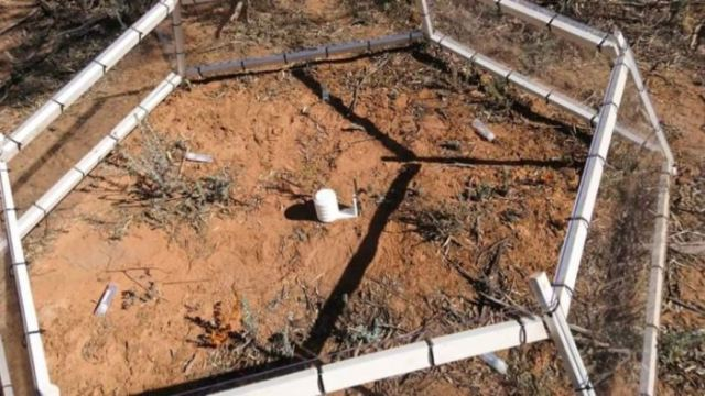 Sumber makanan ditempatkan di struktur tertentu untuk menarik perhatian semut ke tempat yang lebih hangat. (Foto: Berri Barmera Land Care)