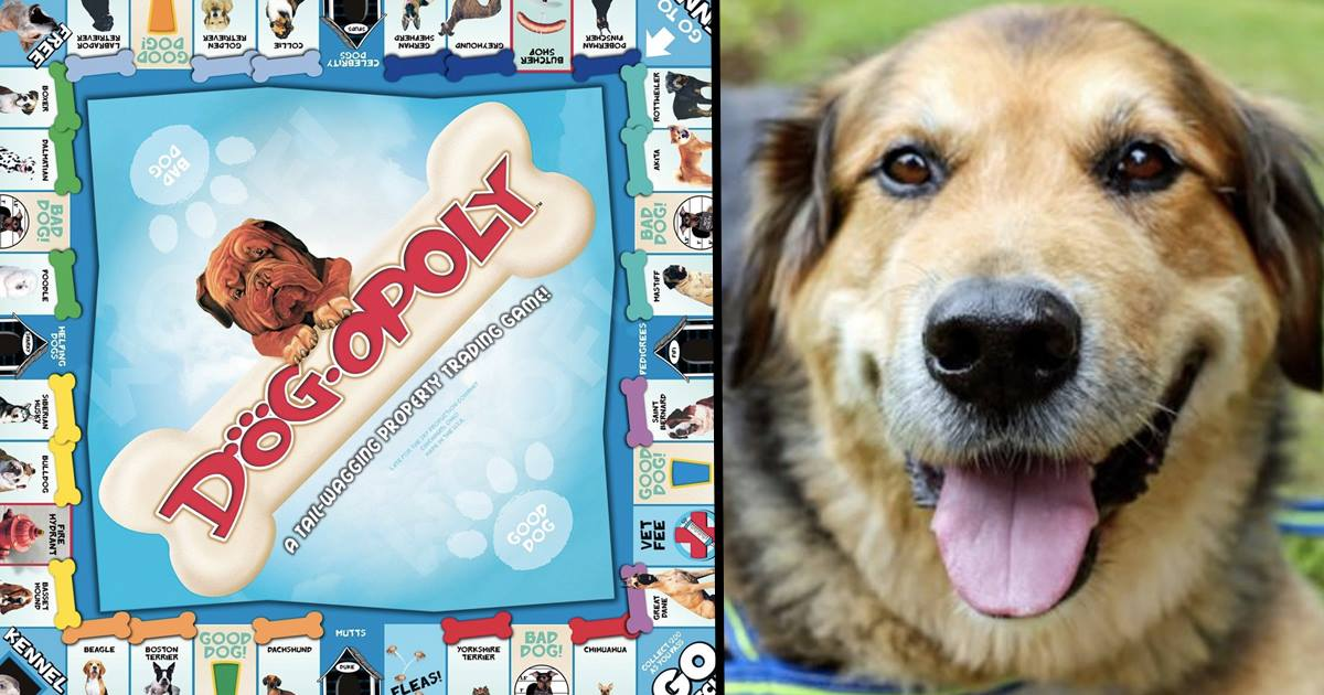 monopoli anjing