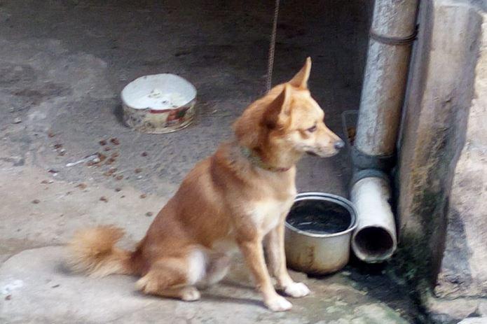 Anjing Nainggolan
