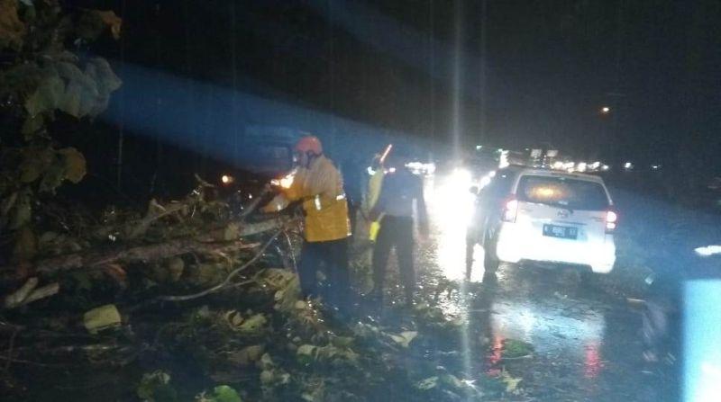 Pohon Jati Tumbang Menutup Jalan Akses Cepu – Blora, Jawa Tengah (foto: Taufik Budi)