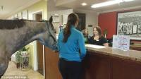 VIRAL! Uji Kebijakan Hotel Ramah Hewan, Wanita Ini Bawa Masuk Kuda ke Kamar