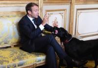 Aduh! Anjing Milik Presiden Prancis Pipis Sembarangan di Istana Kepresidenan