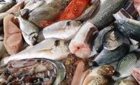 BPOM Belum Temukan Ikan Dori Beracun dari Vietnam