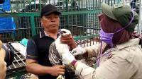 Mantap! BKSDA Aceh Lepasliarkan Dua Ekor Elang Langka ke Hutan Lindung