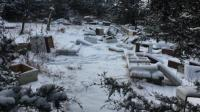 2 Remaja Ditangkap Polisi Akibat Bunuh Ratusan Ribu Lebah