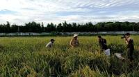 Anies: Di Jakarta Masih Ada 300 Hektare Sawah