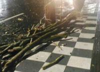 Batang Pohon Tumbang, Dua Mahasiswi Tertimpa hingga Menderita Luka
