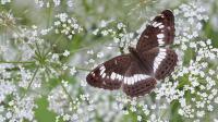 Mengenal Beragam Spesies Kupu-Kupu Nan Indah di Bali Butterfly Park, Tabanan