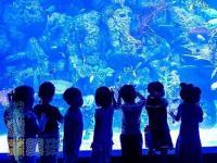 Liburan Seru! Ajak Anak Mengenal 600 Jenis Biota Laut Indonesia