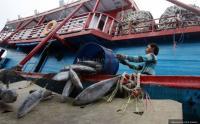 Ekspor Hasil Perikanan Bali Capai USD326 Juta, Naik 46,76%